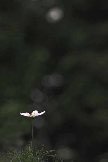 開花する一時