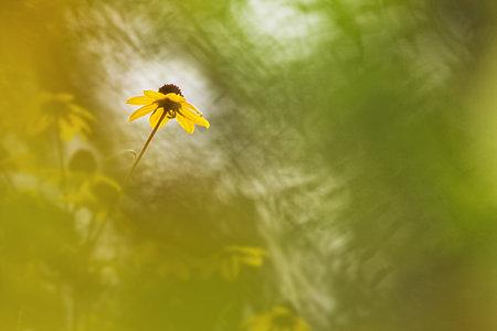 花フィルター