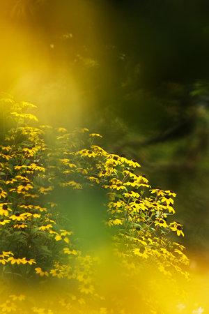 黄色い地球