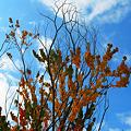 写真: 秋の色