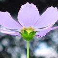 写真: 後ろ姿は何の花