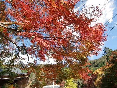 fumonji momijimaturi-221204-6