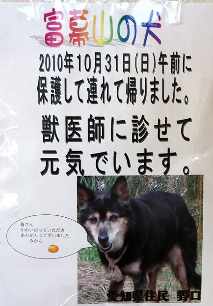 富幕山へ今年☆トミー127回登頂 先日迷子の犬