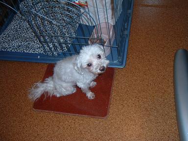 Photos: 犬用御影石!暑さ対策