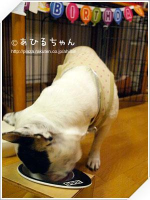 写真: 20110530_04