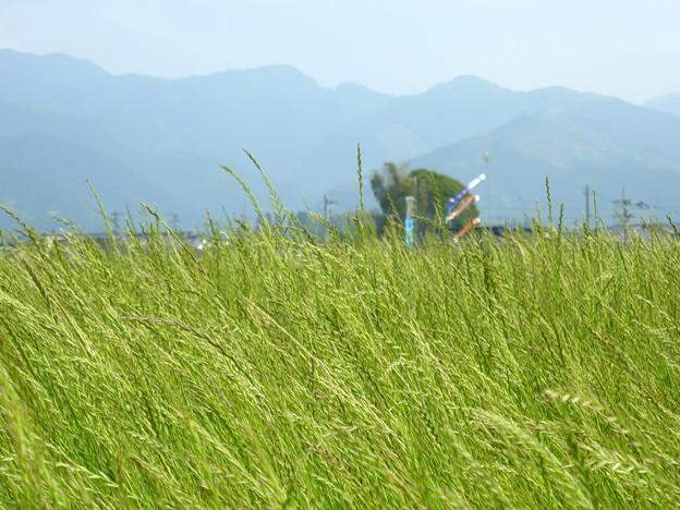 牧草の景色