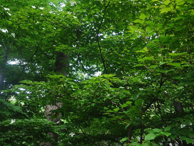 精進ヶ滝への林道