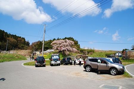 kamiisinohudousakura1
