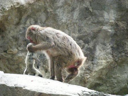 死んだ赤ちゃんを持ち歩くお母さん (1)