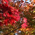 写真: IMG_9886京都の紅葉_2010年11月
