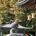 比叡山 延暦寺 少しだけ紅葉(10月)