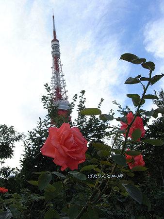 タワーにバラを添えて