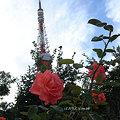 Photos: タワーにバラを添えて