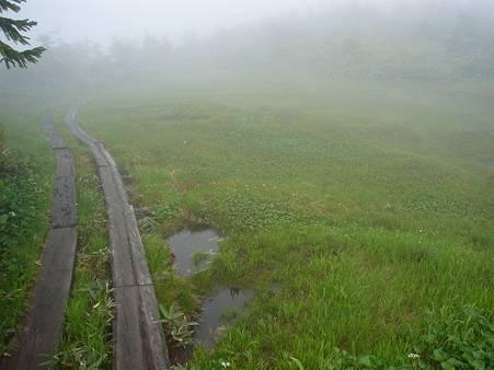 木道と池塘