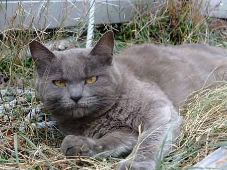 七丈小屋のネコ