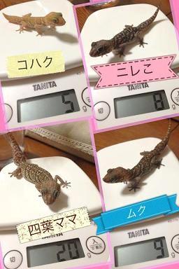 体重測定 ソメ2