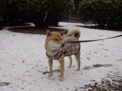 雪降っちゃった