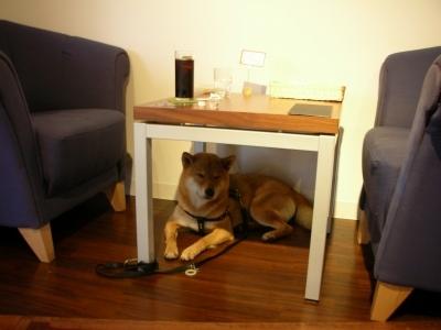 テーブル下犬小屋