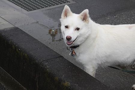 ねーねーいぬや、いぬがいるよ。 ましろちゃんだって犬でしょ。