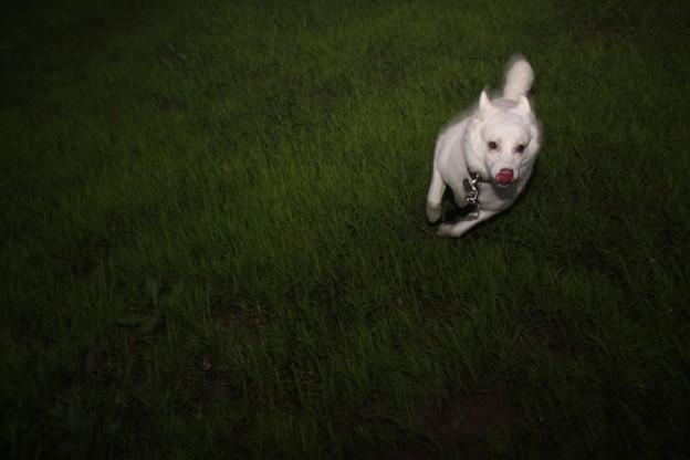 写真: 走る走る(笑)
