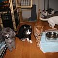 写真: 猫部屋のみなさん