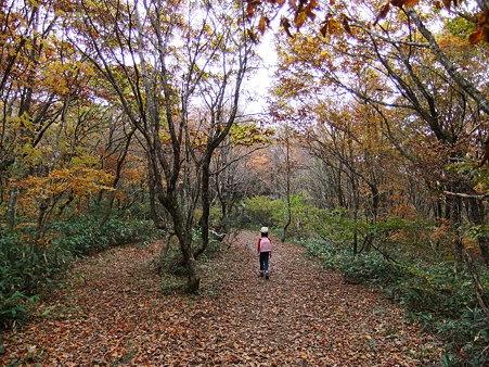 紅葉と落葉のじゅうたん