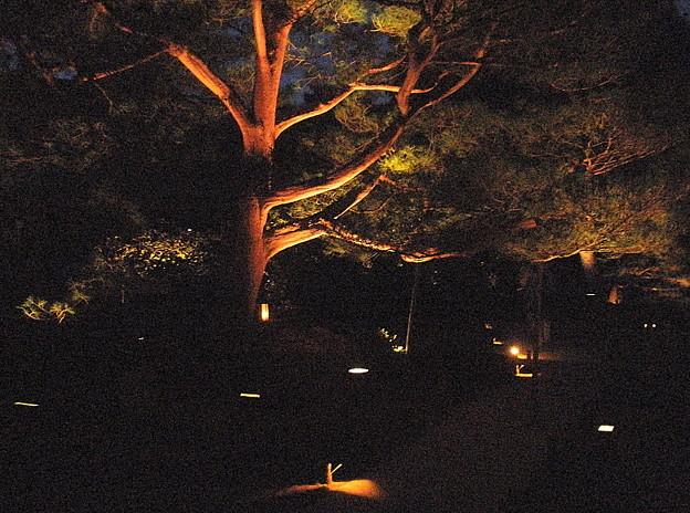 青蓮院門跡 夜間拝観 青不動 20090919