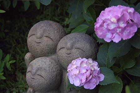 長谷寺の紫陽花 05