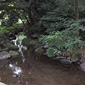 写真: 泉の森 05