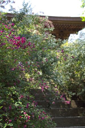 秋の鎌倉 03