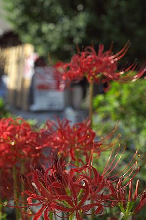 秋の鎌倉 36