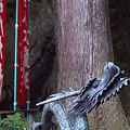写真: 阿夫利神社から日向薬師へ 05