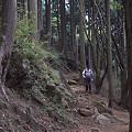 写真: 阿夫利神社から日向薬師へ 06