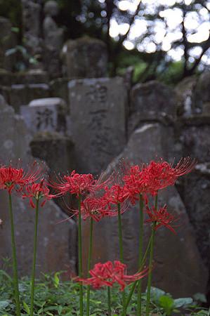 阿夫利神社から日向薬師へ 16