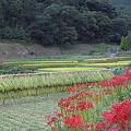 写真: 日向薬師 04