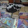 Photos: 本の上でお昼寝する猫